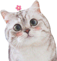 m_cat freetoedit
