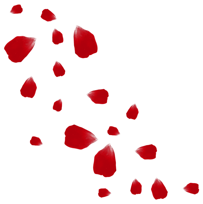 Petalos Rosa Flores Viento Rosepetals