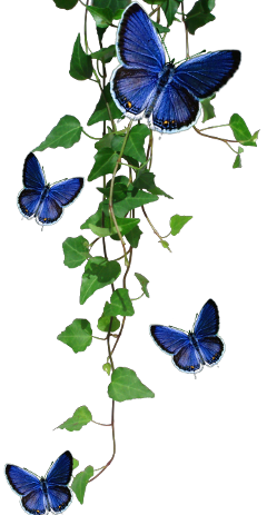 nature vine insects butterflys freetoedit