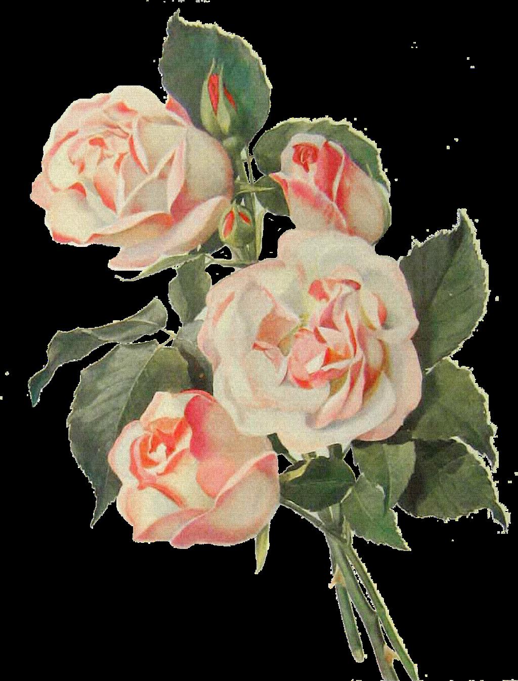 #roses#FreeToEdit