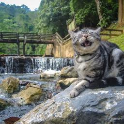 cats chill holiday neko mypet freetoedit