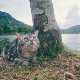 cats chill holiday sky neko freetoedit
