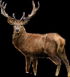 geyik freetoedit