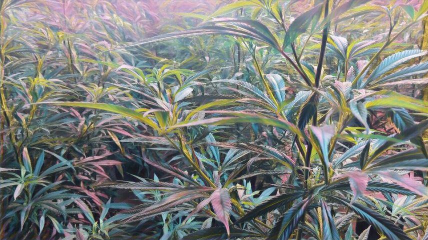 #marijuana,#iloveplants,#weedart,#cannabisart,#marijuanaart