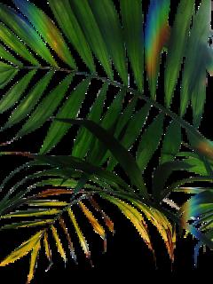 freetoedit flower flowers palma art dayofthedead day