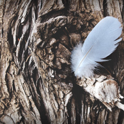 tree feather nature myphotographtpy