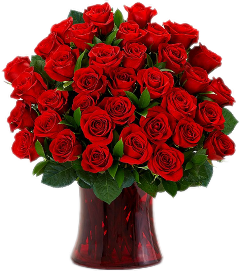 flowers nature beautiful roses red