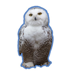 It's,all,about,owls,today.,Create,the,best,owl,sticker,out,there!